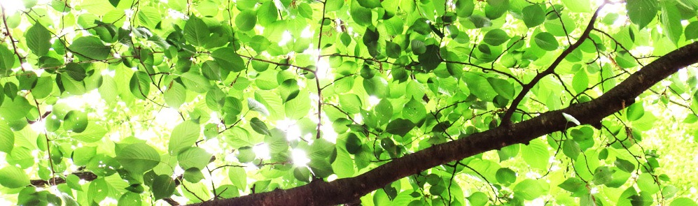 木漏れ日画像