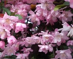春を呼ぶ花